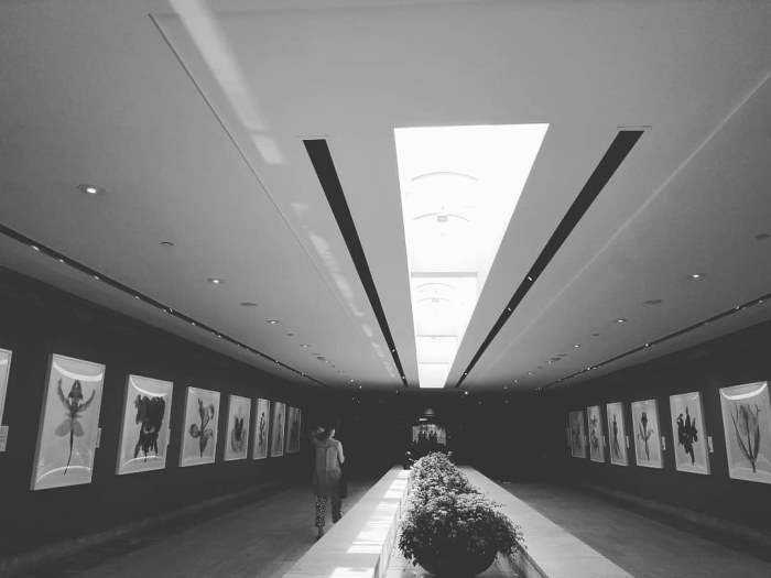 Black and white photo corridors of Chicago Botanical Garden